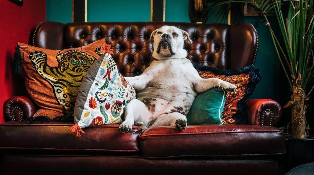 Как выбрать идеальную гостиницу для домашних животных?