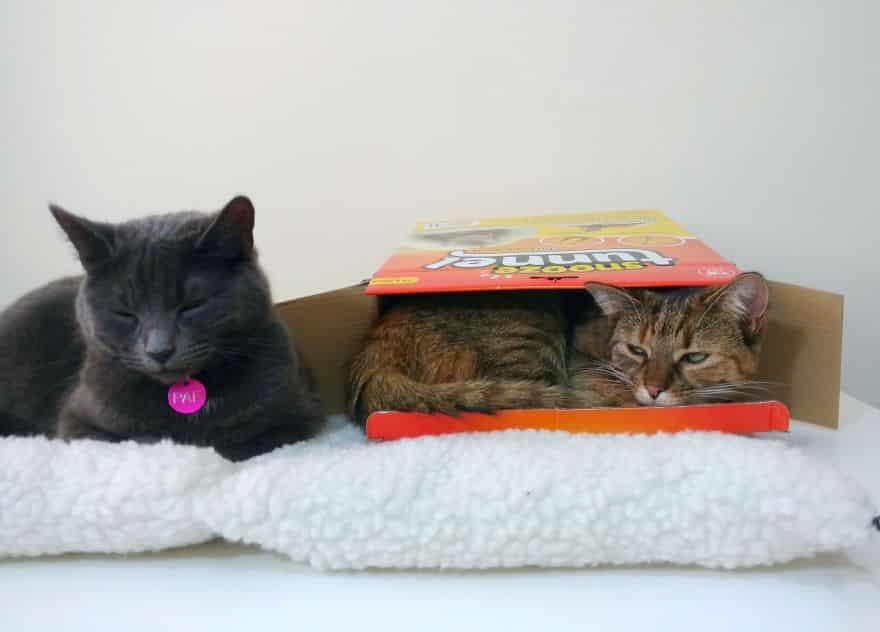 Кошки совокупляются