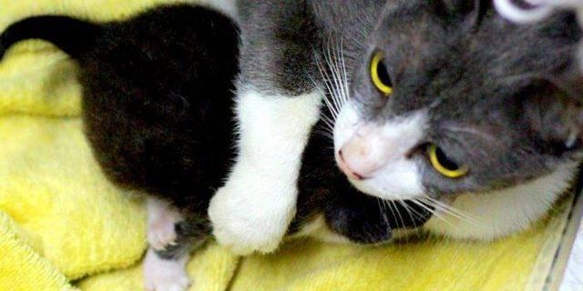 Почему кошка стала агрессивной?