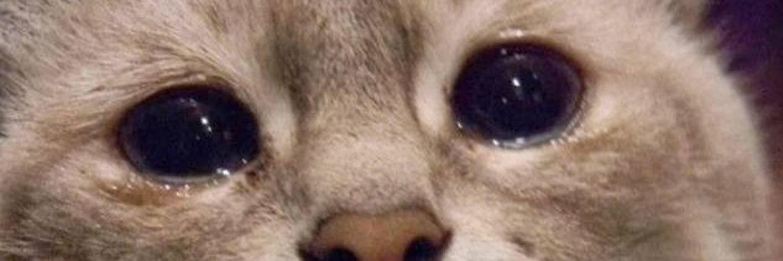 У кота текут слезы из глаз: причины и лечение