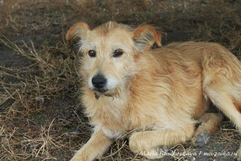 Дворняжка (собака): описание беспородных двортерьеров