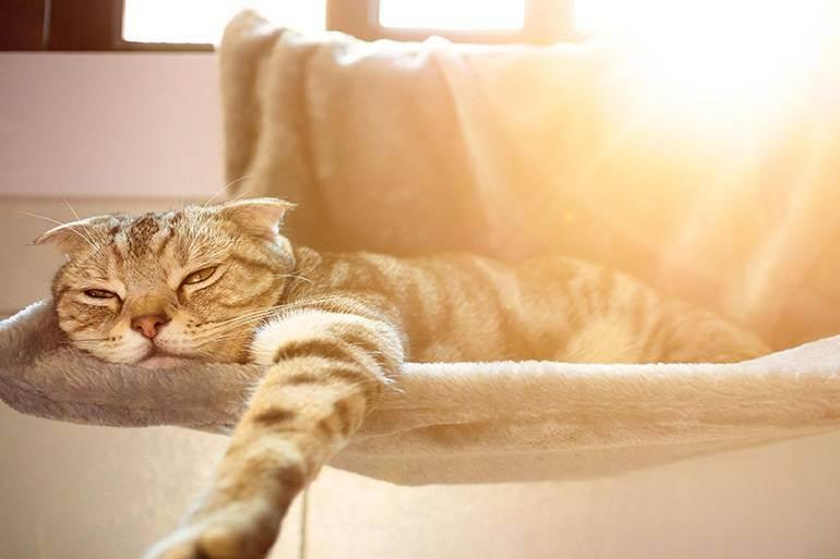 Солнечный и тепловой удары у животных