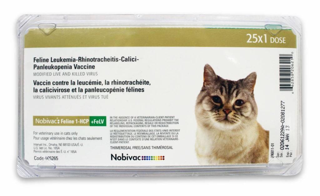 Лептоспироз у кошек — симптомы и лечение - zhivomag