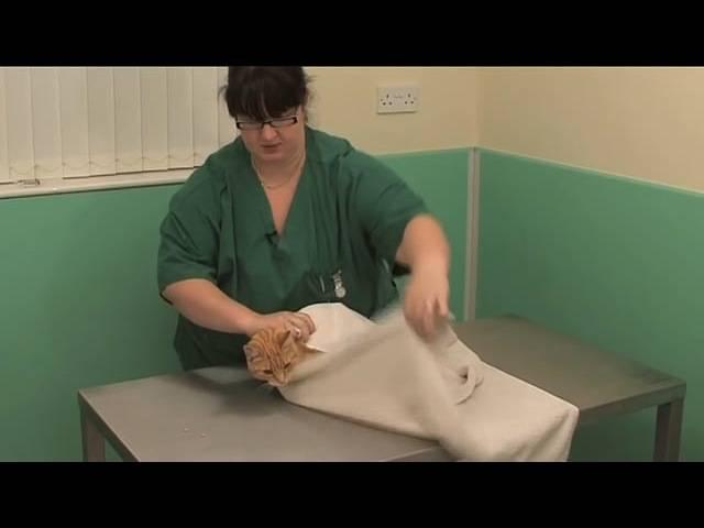 Как правильно давать коту таблетки от глистов — глисты — расскажем о всех глистах!