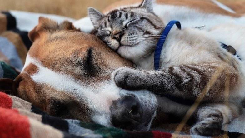 Психические потребности домашних кошек