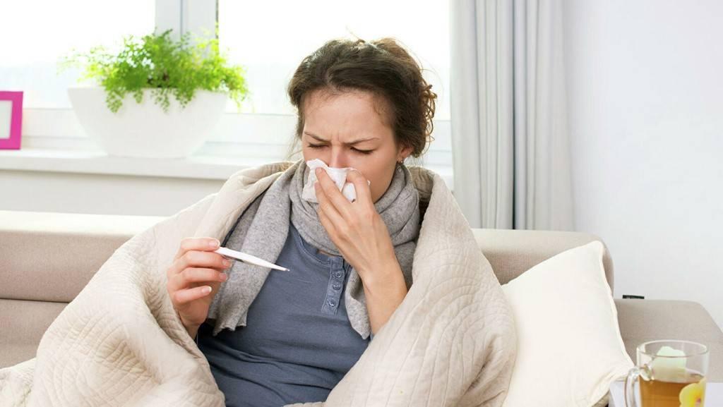 Могут ли кошки подхватить простуду или заболеть гриппом | hill's