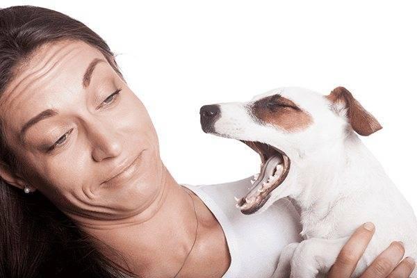 Что делать, если у кота неприятно пахнет изо рта?