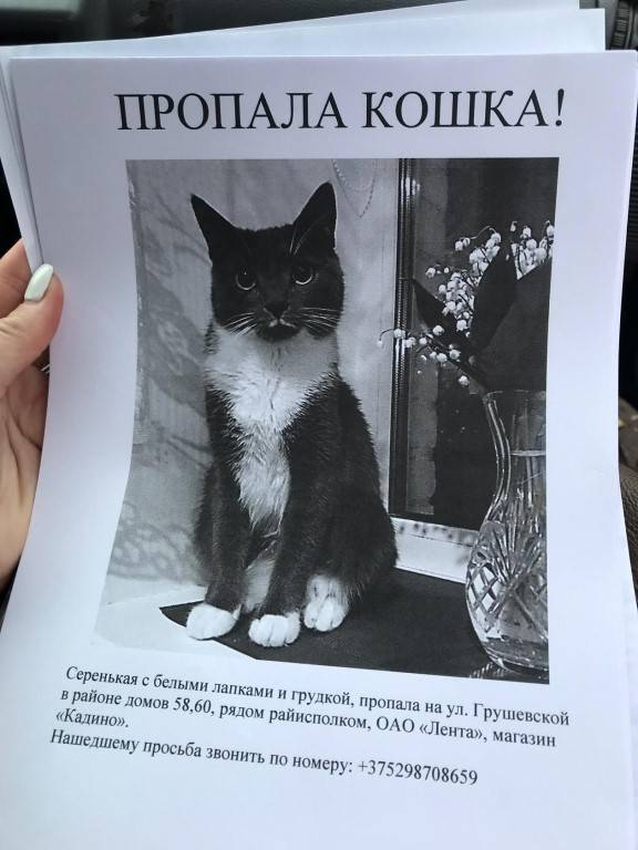 Что делать если пропал кот в поселке. как найти пропавшую кошку. подготовка к поискам - новая медицина