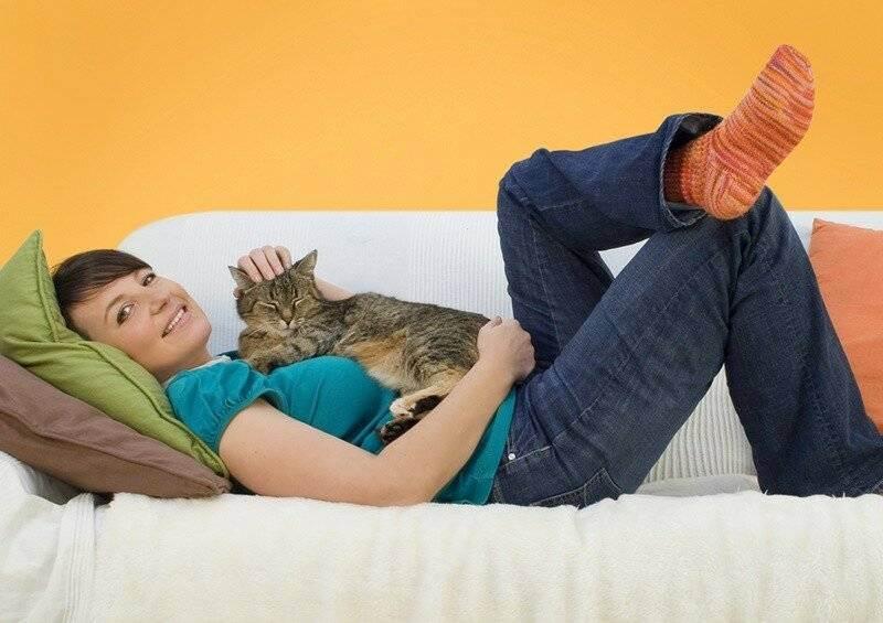 Любовь, феромоны и «молочный шаг» — зачем кошки топчут нас лапками? — 4 лапки
