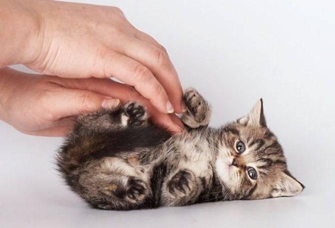 ✅ у кота урчит в животе и понос - ipraktica.ru