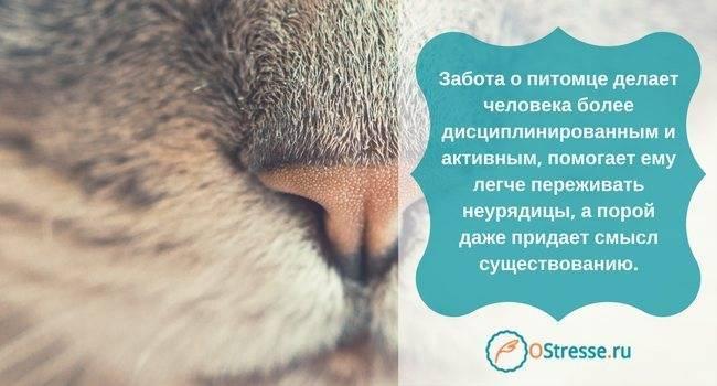 Как пережить смерть собаки: советы психолога