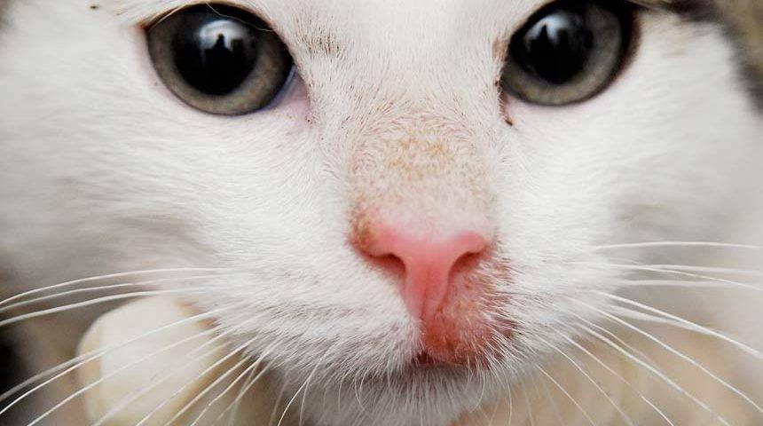 Лишай у кошек: причины, разновидности, симптомы, и методы лечения