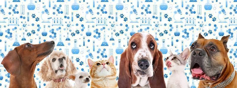 Этический кодекс ветеринарного врача
