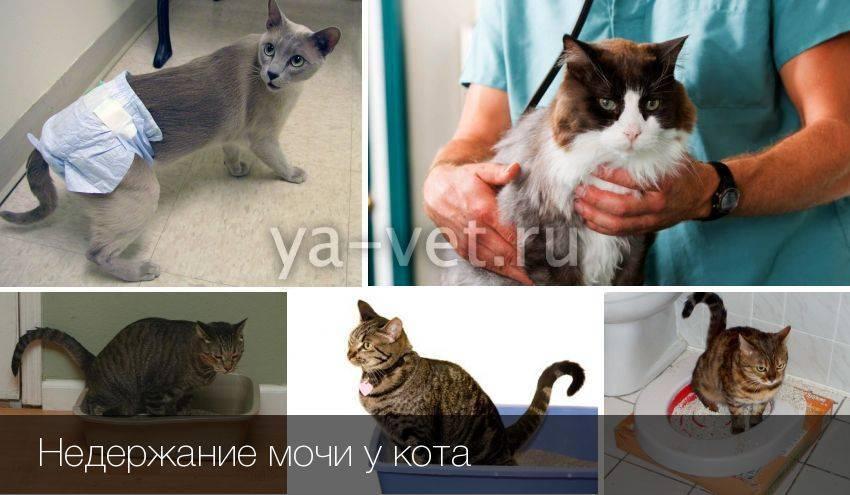 Как заставить кота пописать - oozoo.ru