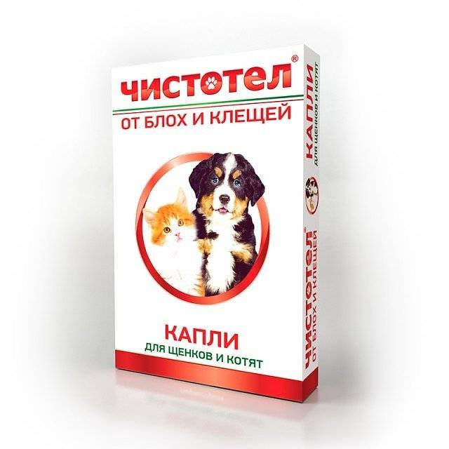 Дешево и эффективно! чистотел от блох и клещей для кошек