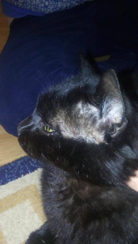 Что может вызывать облысение вокруг глаз у кошки?
