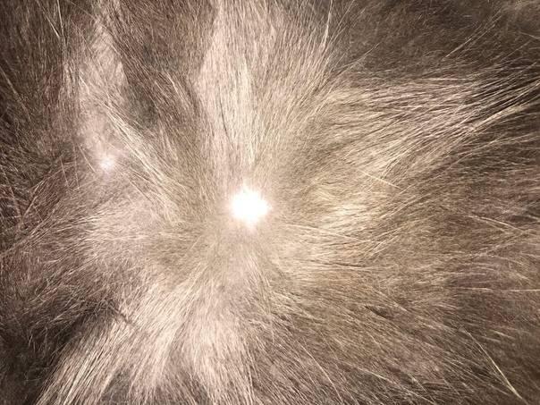 Почему у кошек и котов выпадает шерсть