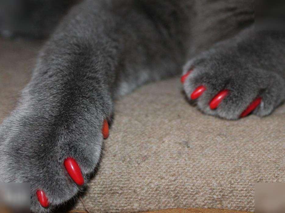 Силиконовые антицарапки для котов и кошек: инструкция по применению защиты, существующие размеры, как правильно клеить