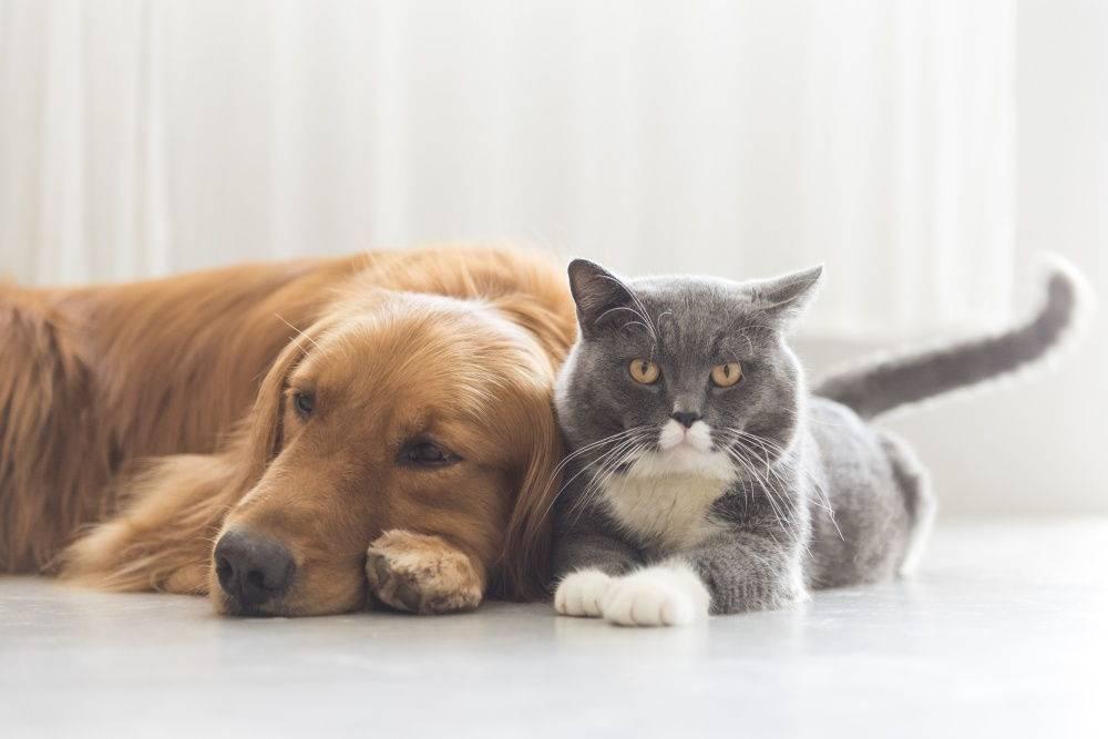 Кого вы больше любите? ученые узнали, что значит пристрастие к кошкам и собакам