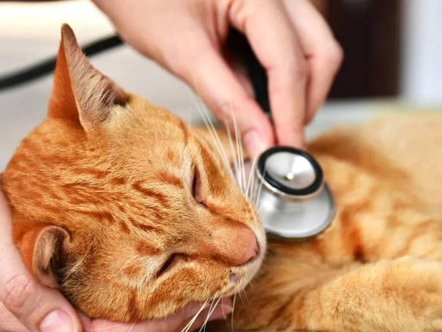 Кот плохо ест и худеет: причины, но активный