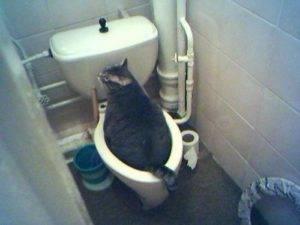 Почему кошка часто ходит в туалет по маленькому, сколько раз в день должен писать кот