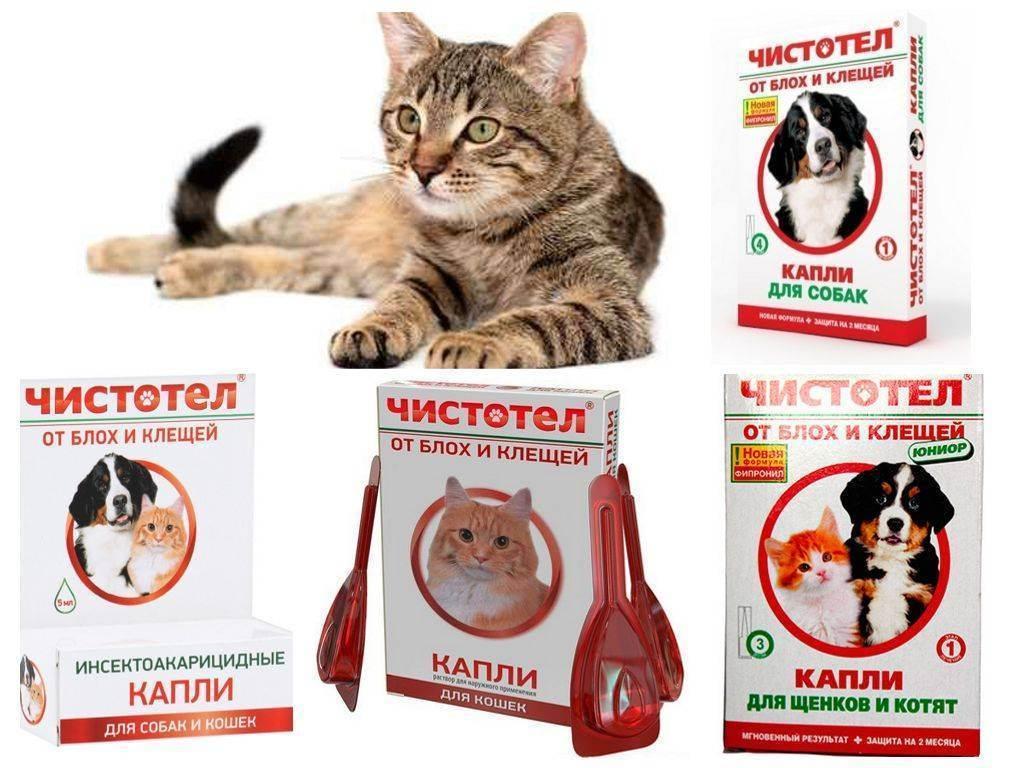 ❶ топ-7 лучших капель на холку от клещей для кошек и котят