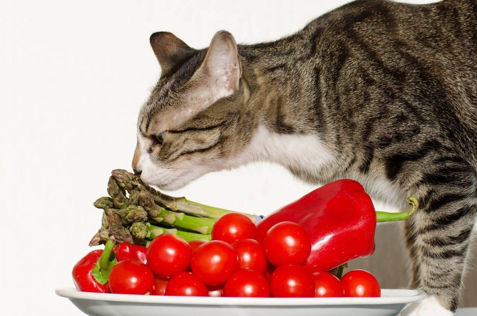 Можно ли кошку кормить только сухим кормом, как это делать правильно и каким лучше