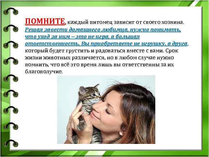 Как воспитать котенка и привить ему хорошие манеры