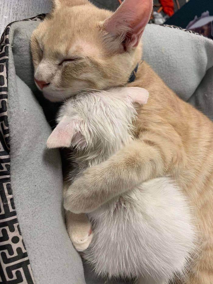 Сонник спасти кошку от собаки. к чему снится спасти кошку от собаки видеть во сне - сонник дома солнца