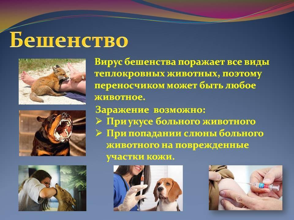 Чем и какими паразитами можно заразиться от кошки человеку | все о паразитах