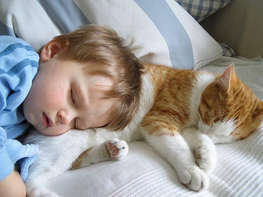 Почему кошка на больное место человека ложится. | школа красоты