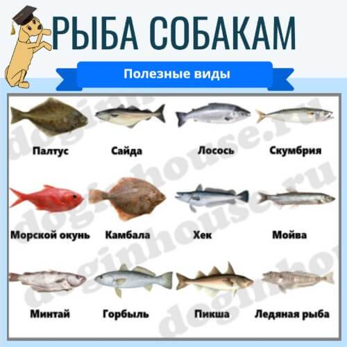 Рыбий жир для кошек: свойства, польза и вред, противопоказания