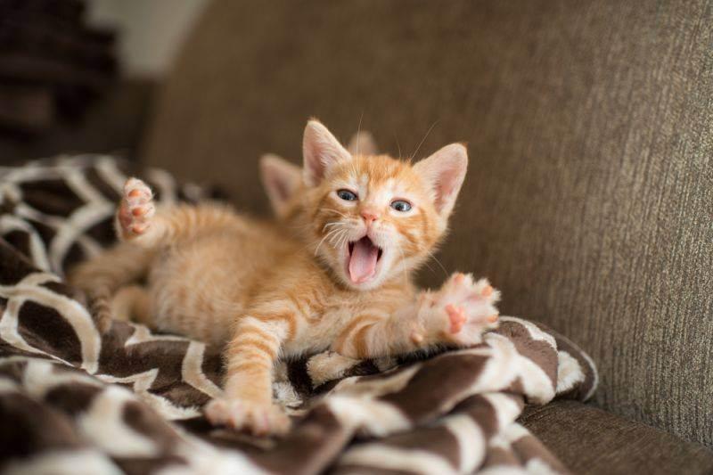 Как назвать кота и кошку рыжего цвета?
