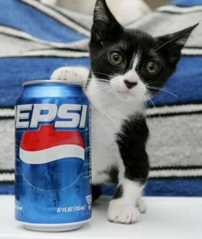 Сингапурская кошка в обзоре породы и оценке характеристик