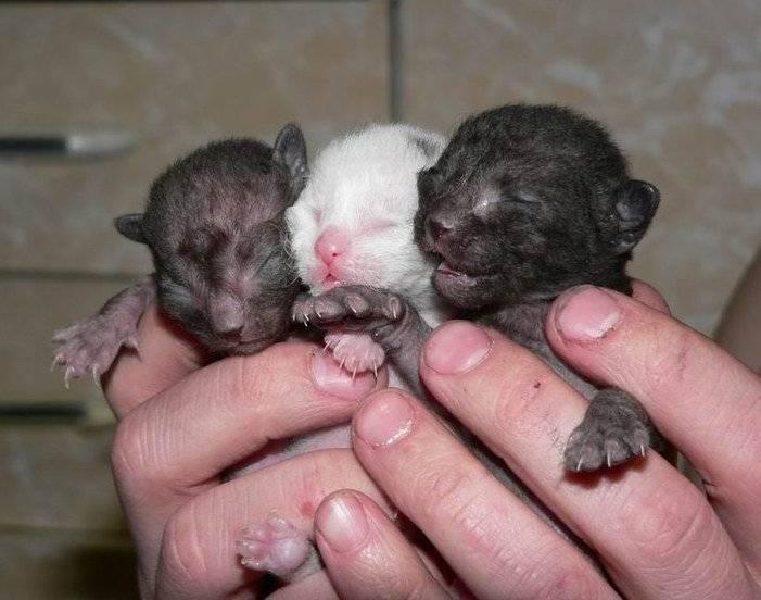 ᐉ когда у новорожденных котят открываются глаза? - ➡ motildazoo.ru