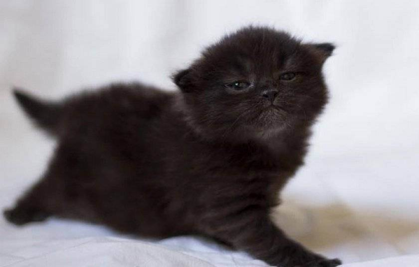 Как назвать котенка - самые красивые и интересные имена для котят