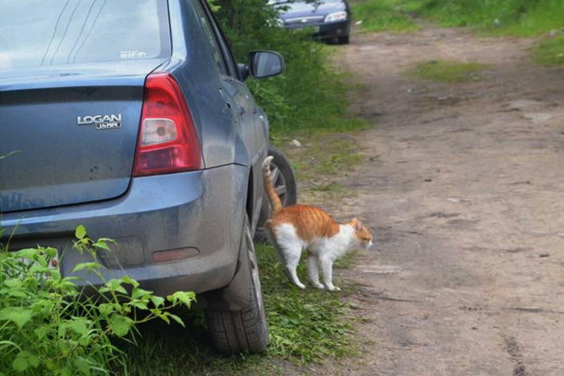 7 причин, почему кошка метит территорию – что делать