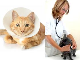Вялость и слабость у кошек