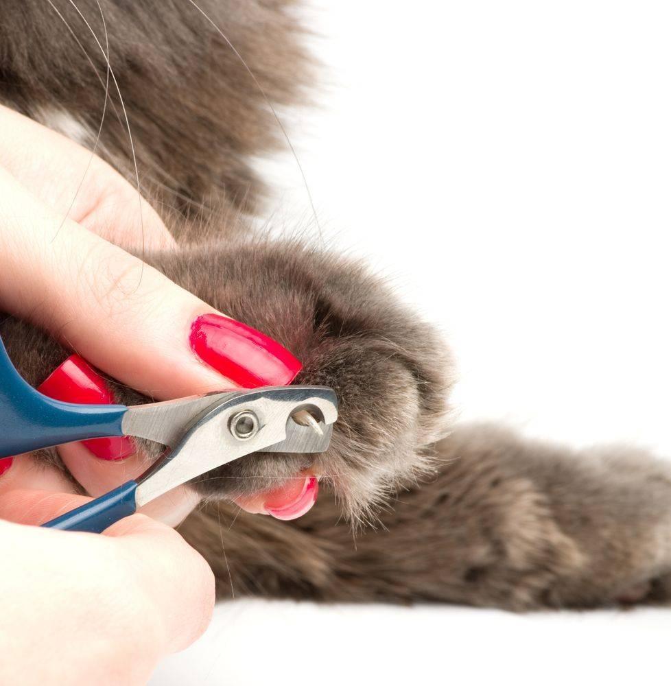 Как самостоятельно подстричь когти кошке