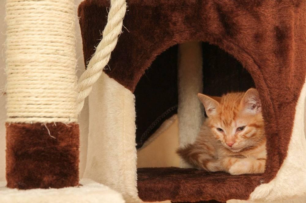 Котенок.первые дни в доме | все о кошках