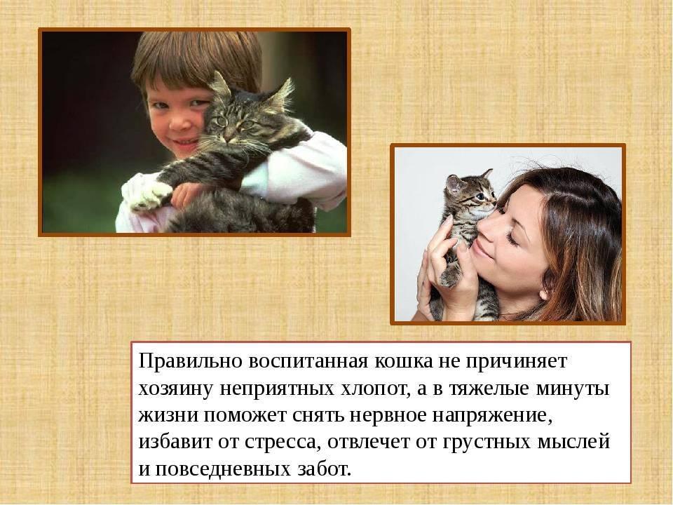 10 «нельзя» для хозяина кошки. уход, питание, кормление - квартира, дом, дача - медиаплатформа миртесен