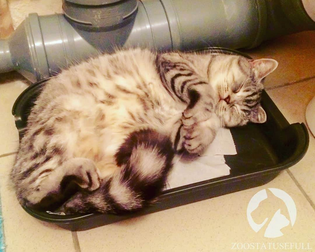 Что делать, если кошка перестала ходить в лоток