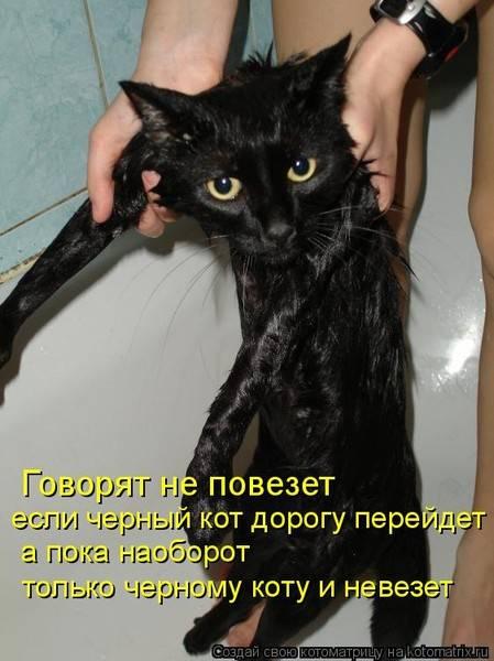 Приметы и суеверия про котов черного цвета