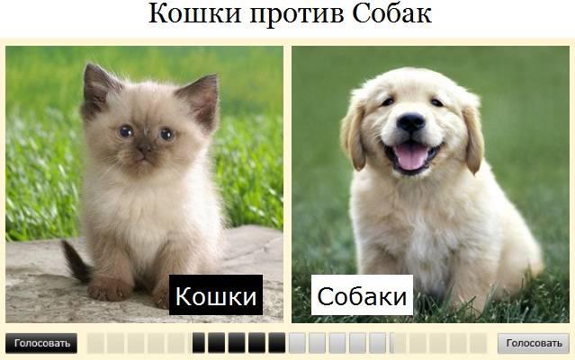 Кого в мире больше: кошатников или собачников