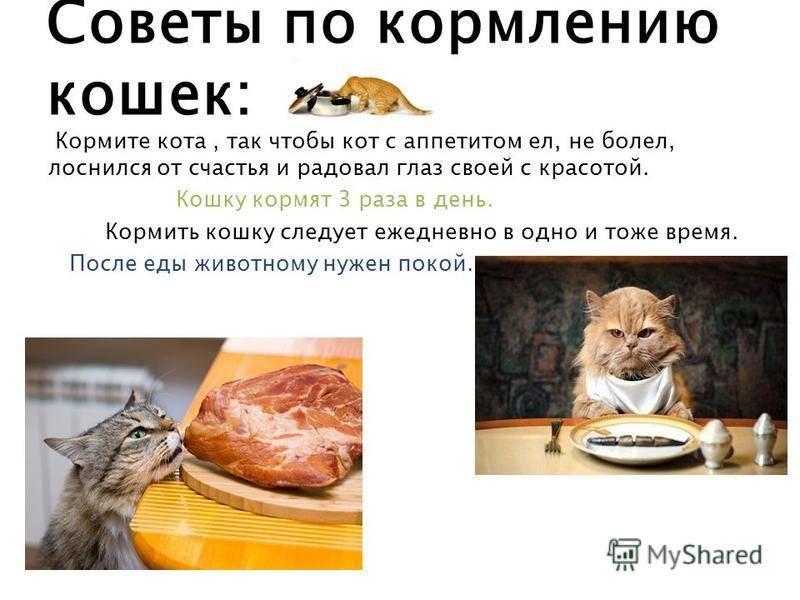 Чем кормить кастрированного кота, чтобы сохранить его здоровье? | рутвет - найдёт ответ!