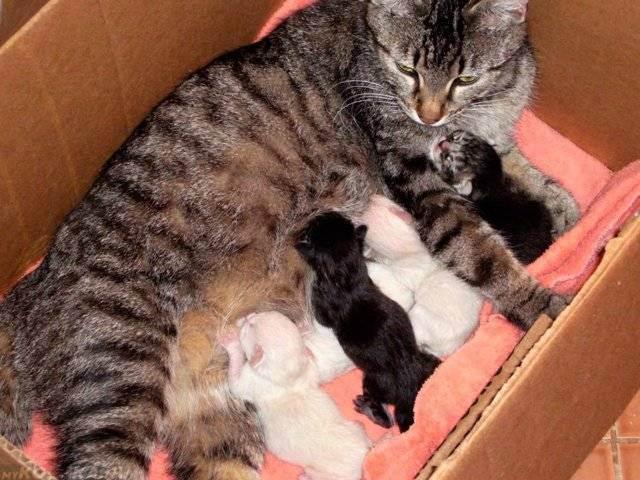 Общее клиническое обследование собак и кошек