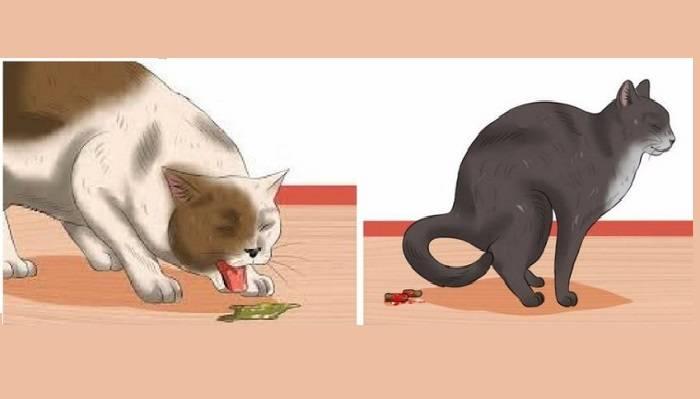 Кота постоянно рвет и поносит: чем помочь питомцу дома самостоятельно