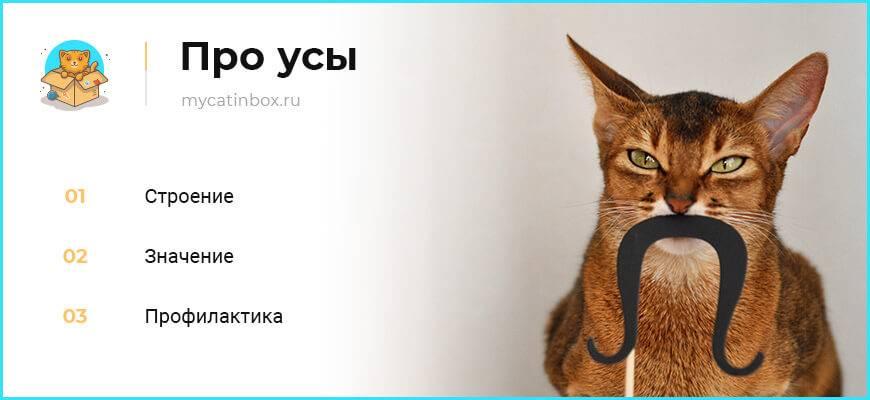 Зачем кошке и коту нужны усы: функции усов | zdavnews.ru
