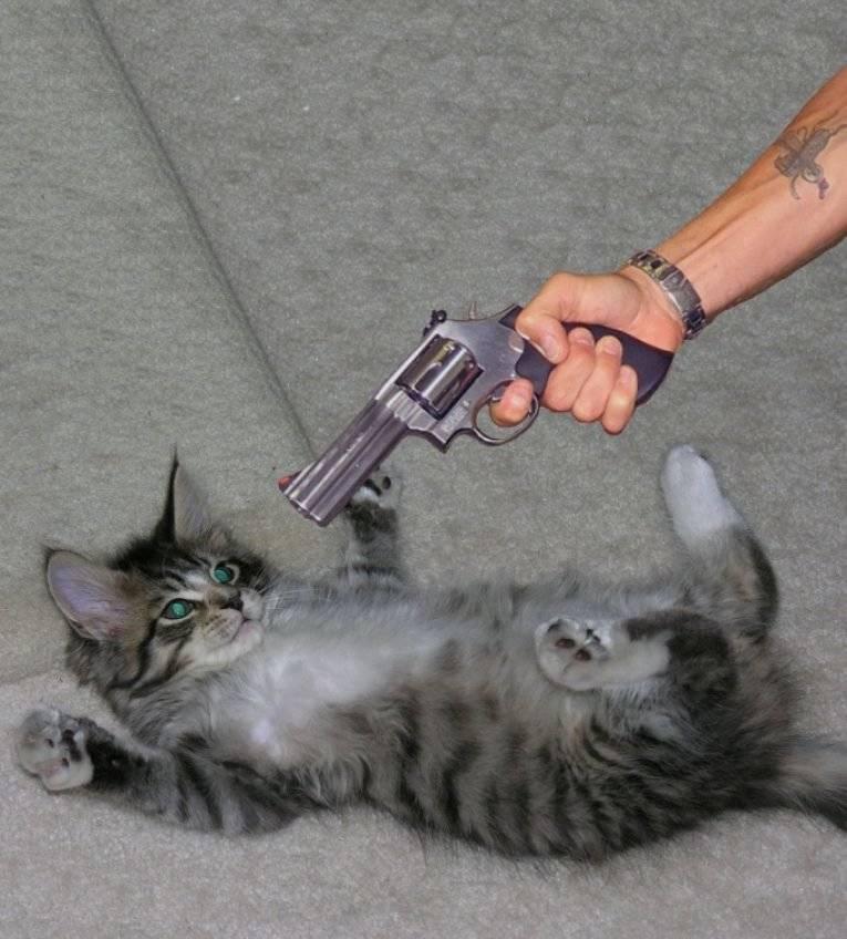 Как раз и навсегда отучить кошку гадить, причины и решения проблемы