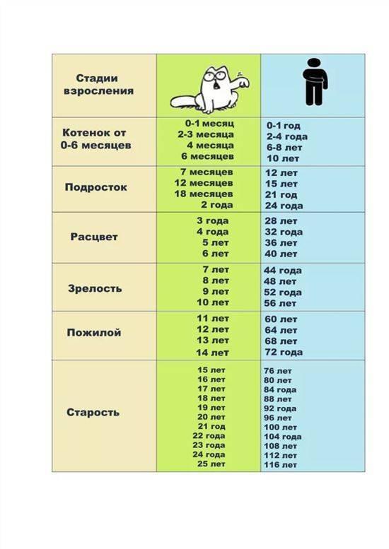 Как определить возраст котёнка: способы вычисления в домашних условиях